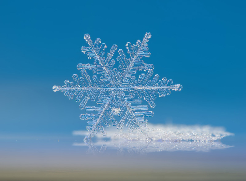 Picture of the Day: MacroSnowflake