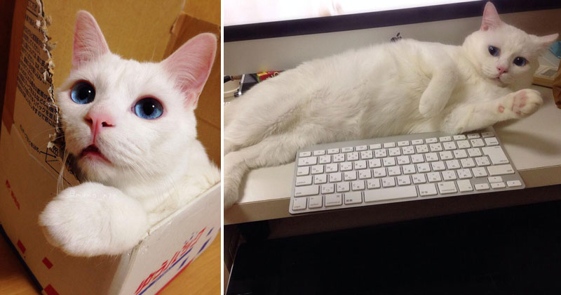 "See Why this Cat Was Named the ""Most Awful Sleeping Face"" in Japan"