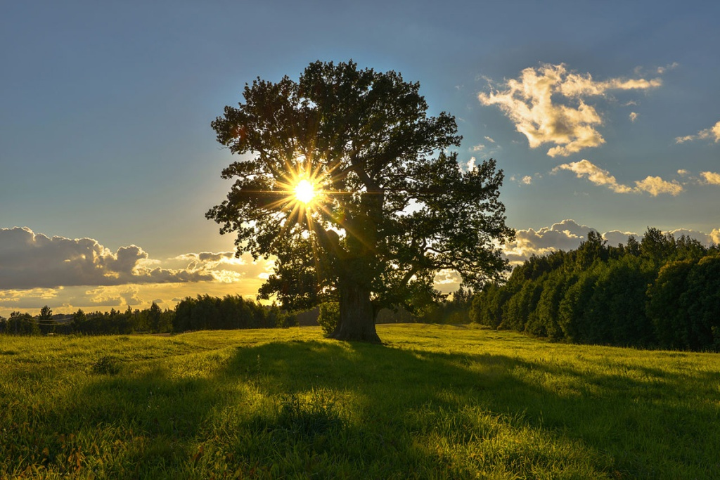 Picture of the Day: The Oldest Tree in Estonia
