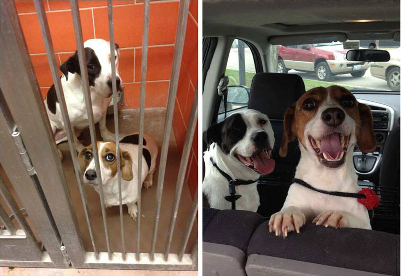 two dogs adoption happiness then and now sad happy Abandoned Magpie Roams Free but Always Returns to Family that Rescued Her