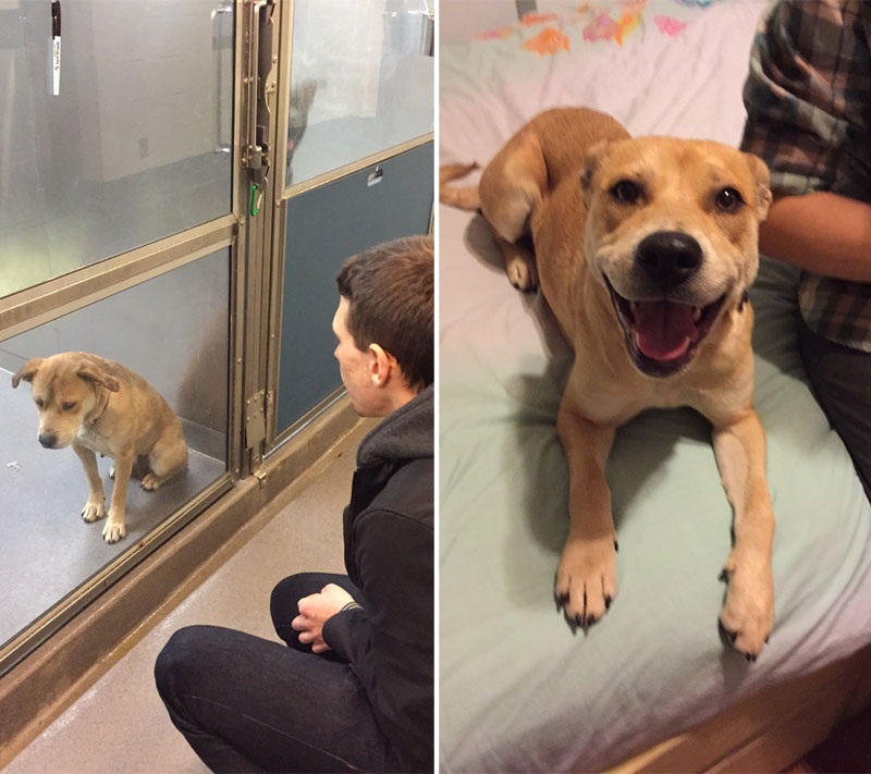 before and after pics of adopted dogs 1