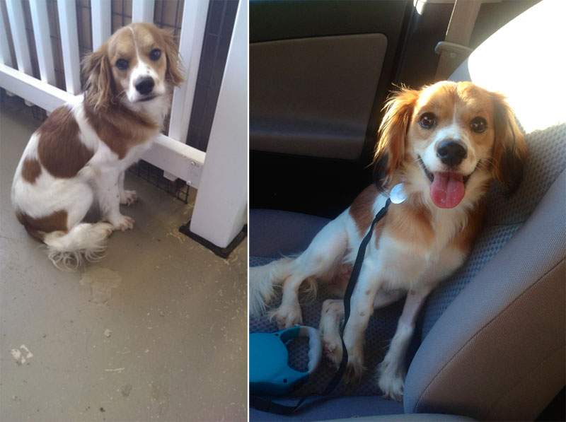 before and after pics of adopted dogs (13)