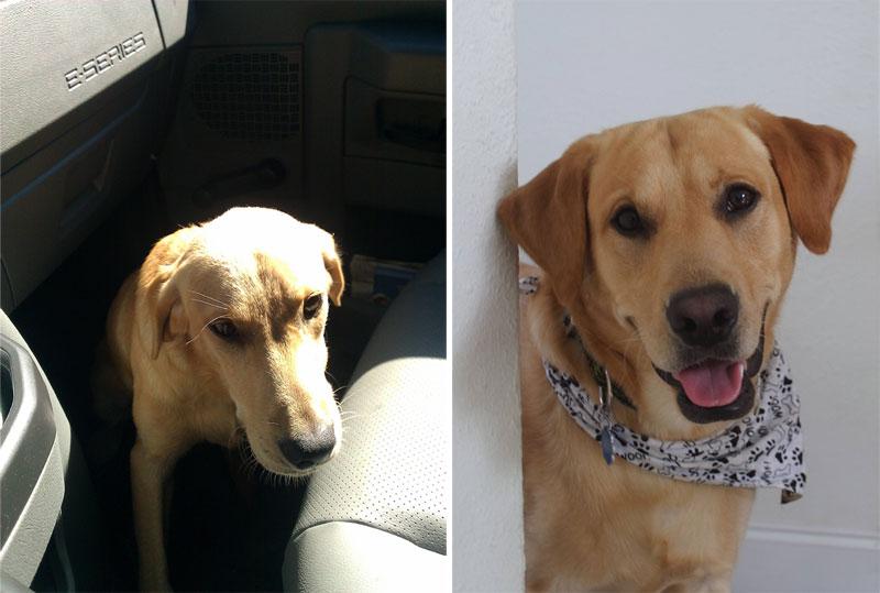 Rescue Dog Stpries Reddit