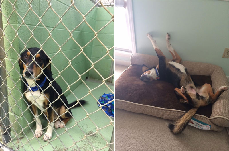 before and after pics of adopted dogs 2