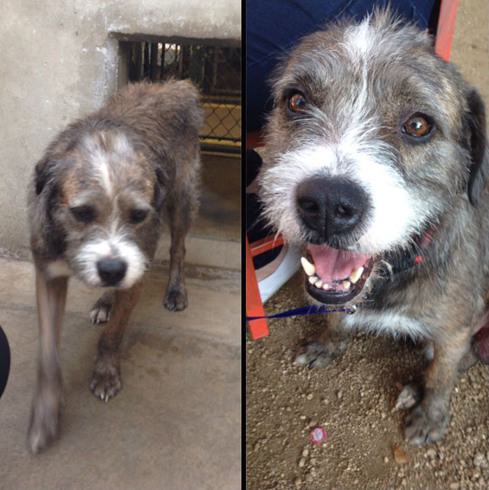 before and after pics of adopted dogs 6