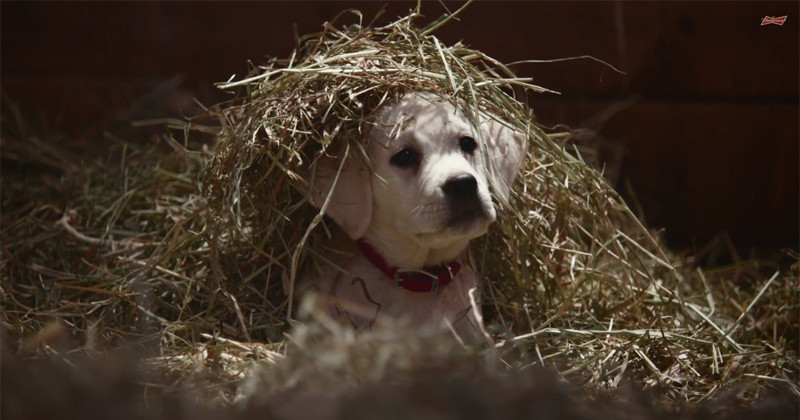 budweiser 2015 super bowl commercial puppies and clydesdales