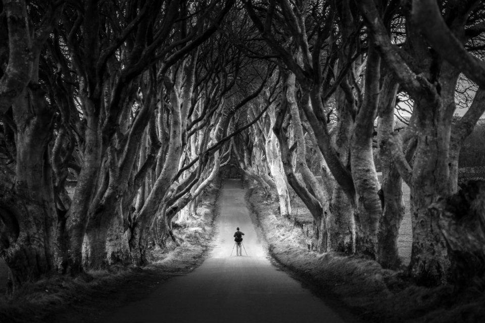 dark hedges of northern ireland bregagh road The Top 50 Pictures of the Day for 2015
