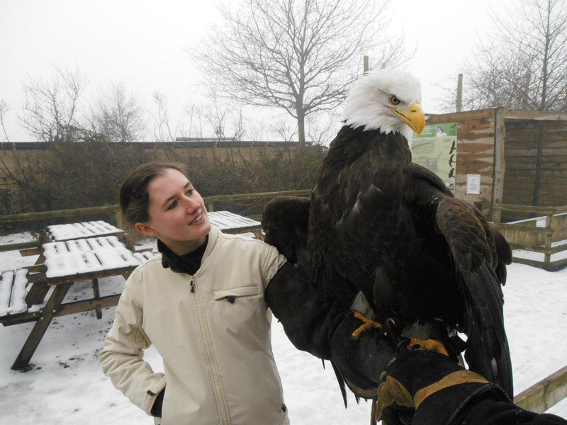 Handler Shares Her Amazing Images With Birds of Prey (2)