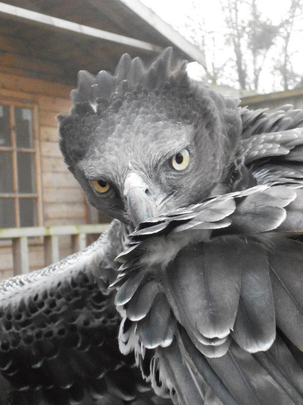 Handler Shares Her Amazing Images With Birds of Prey (4)