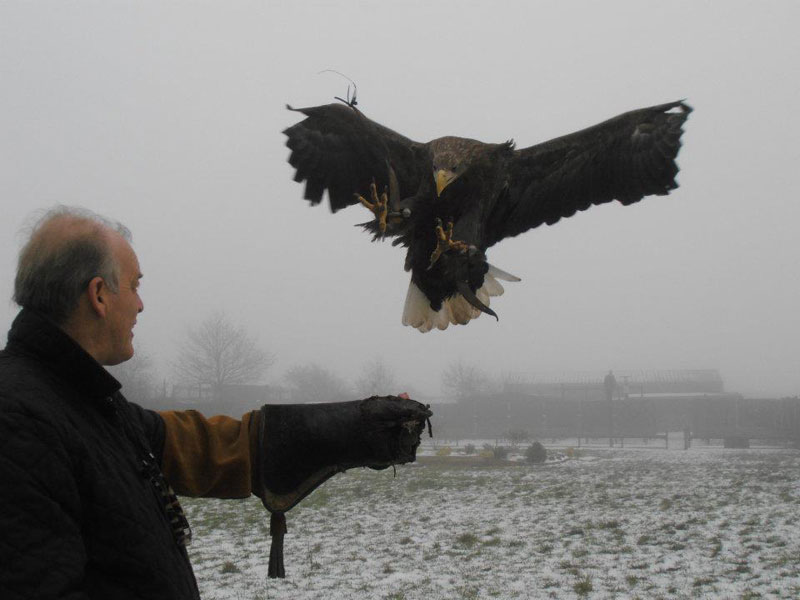 Handler Shares Her Amazing Images With Birds of Prey (5)