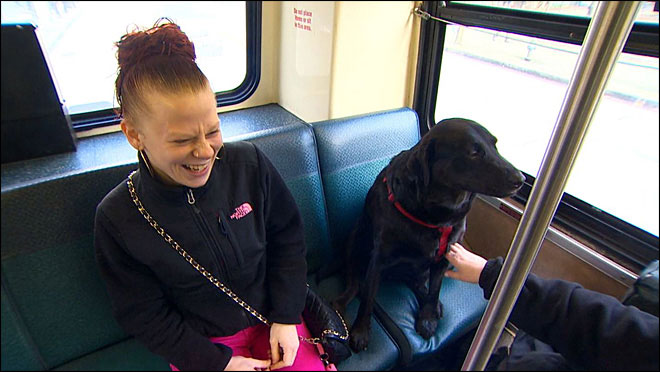 Independent Dog Rides the Bus by Herself to the Park seattle (3)
