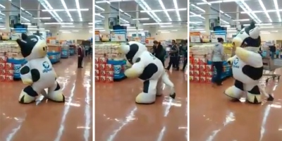 Give This Dancer In a Cow Suit aRaise