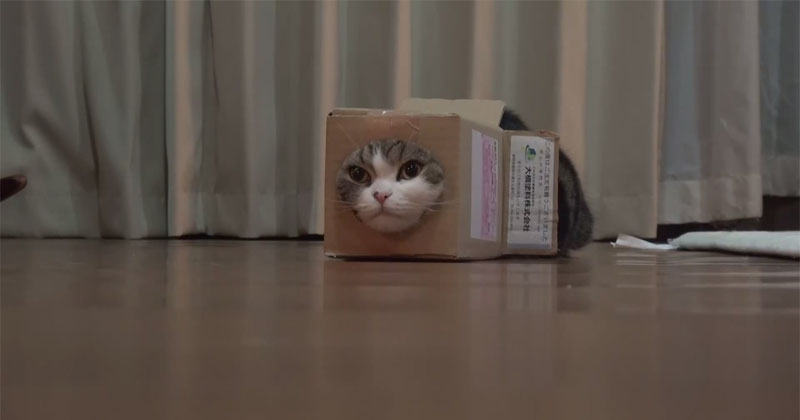This Guy Cut A Hole In A Box And Let His Cat Do Its Thing