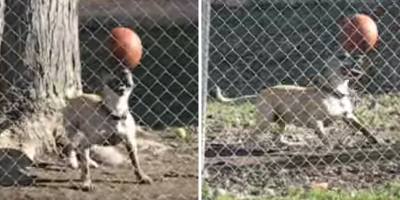 Need a Smile? Just Watch this Dog Balancing a Ball on His Head