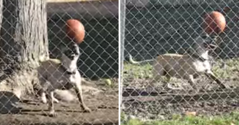 Need a Smile? Just Watch this Dog Balancing a Ball on HisHead