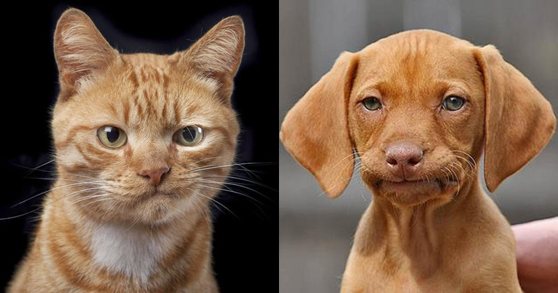 not-impressed-meh-cat-and-dog.jpg