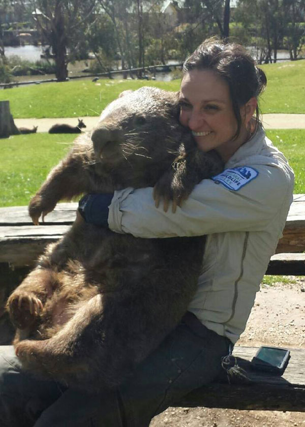 patrick the oldest and largest living wombat (6)