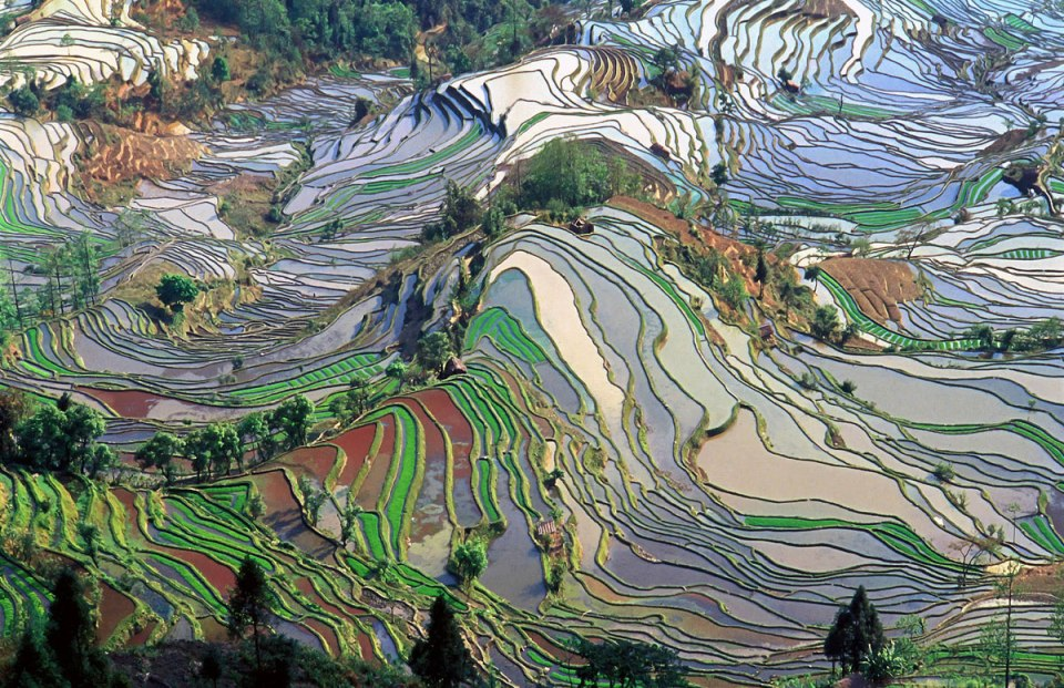 rice terraces in yunnan china aerial from above The Top 50 Pictures of the Day for 2015