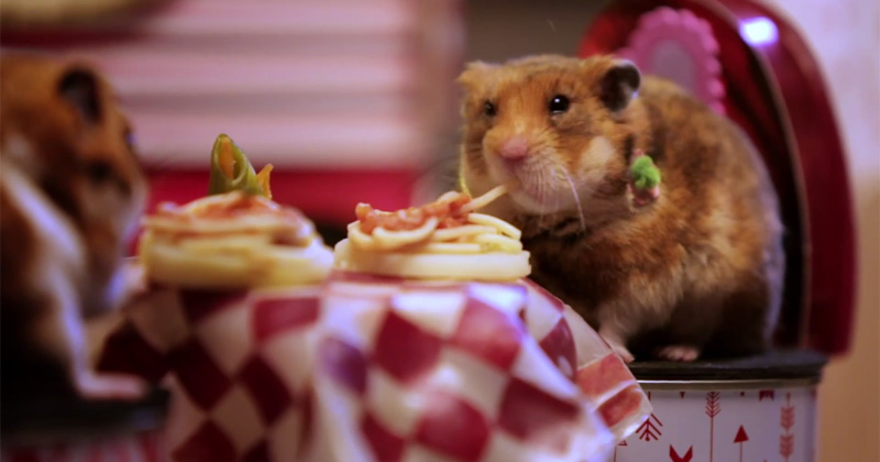 A Tiny Valentine's Date for Tiny Hamsters