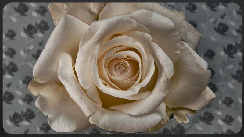 Breathtaking 5K Timelapse Shows 21 Different Flowers inBloom
