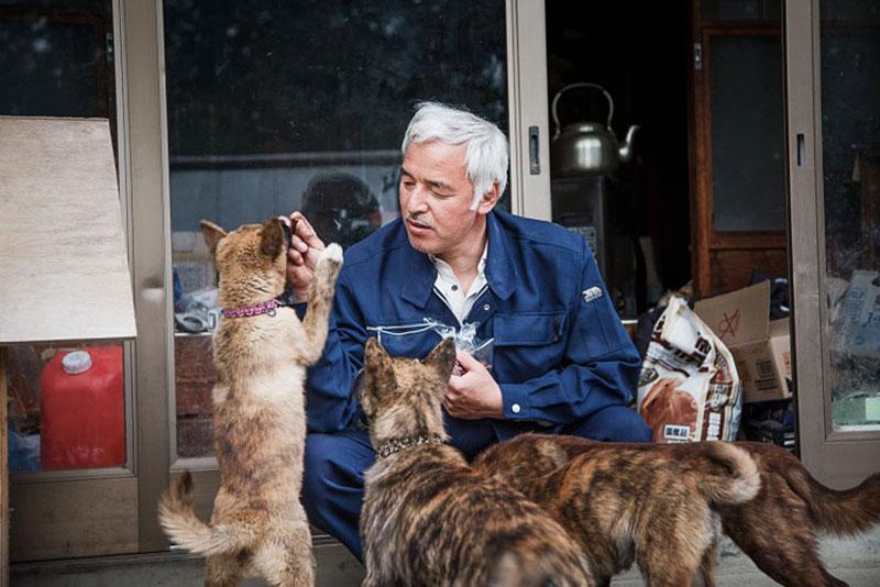 after fukushima Naoto Matsumura takes care of abandoned animals in tomioka (12)