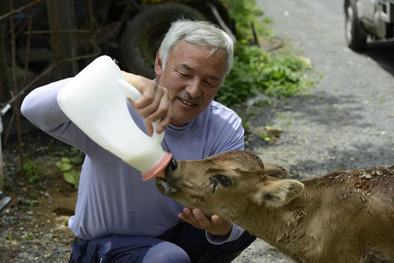 after fukushima Naoto Matsumura takes care of abandoned animals in tomioka (5)