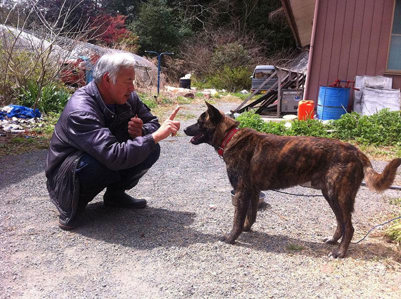 after fukushima Naoto Matsumura takes care of abandoned animals in tomioka (7)
