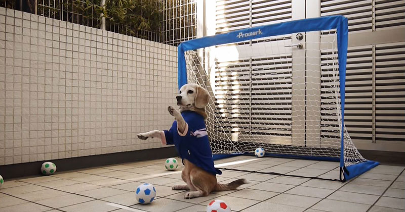 beagle-dog-goalkeeper