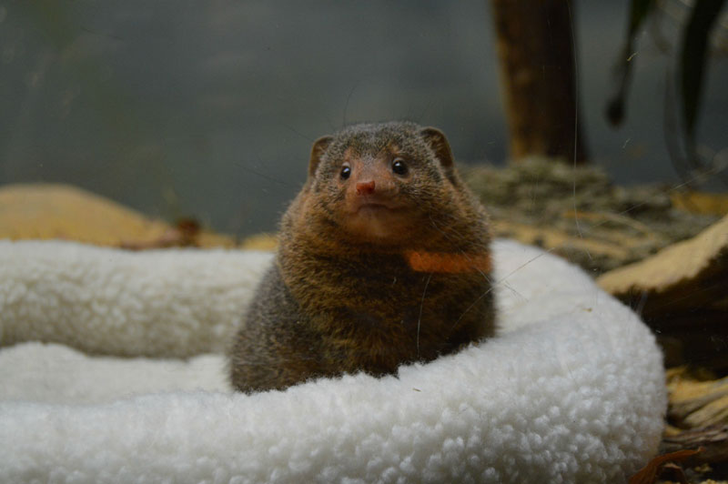 Picture of the Day: Just a Dwarf Mongoose «TwistedSifter