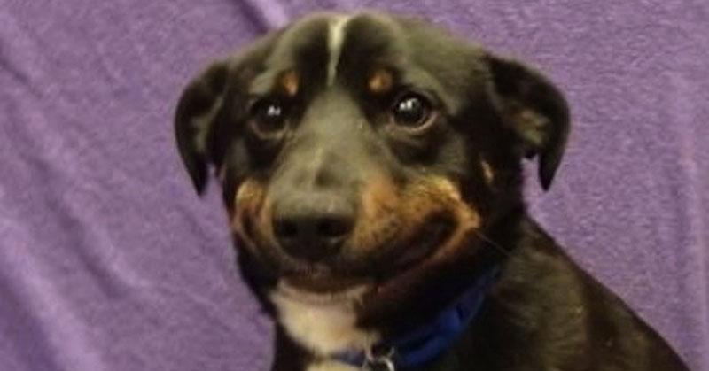 Dog smiling meme - photo#39