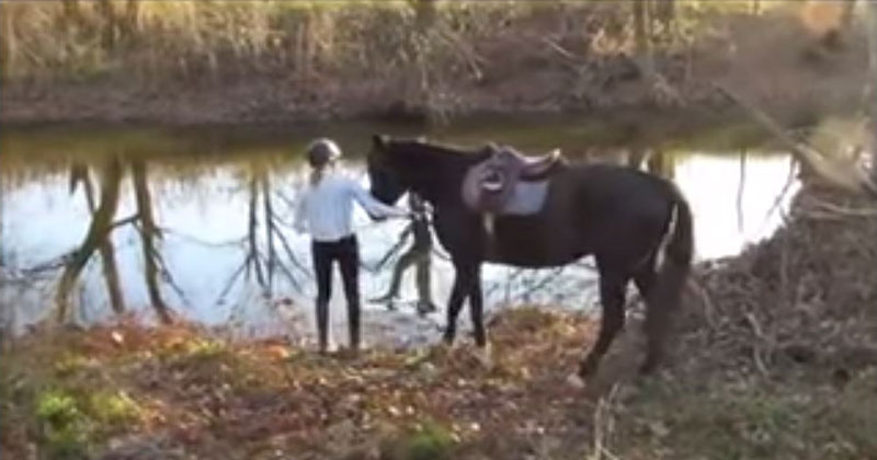 This Horse's First Time in Water Could Not Have Gone Any Better