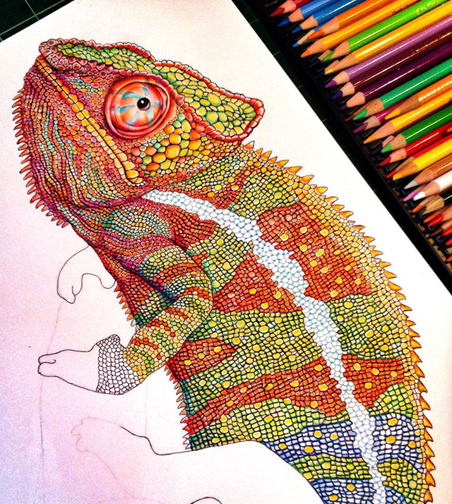 incredibly detailed pencil crayon drawings of iguana and chameleon by tim jeffs (10)