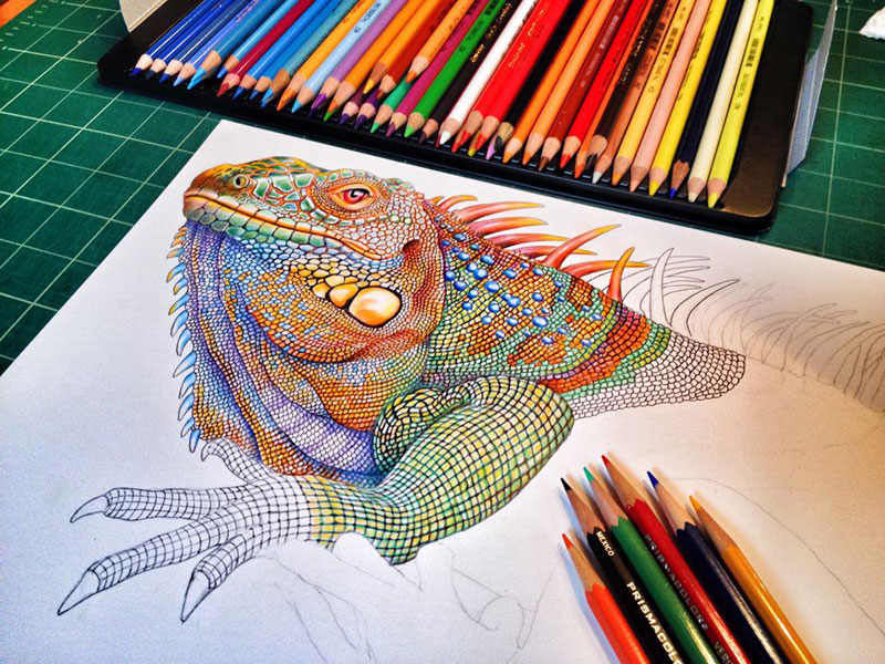 incredibly detailed pencil crayon drawings of iguana and chameleon by tim jeffs (4)