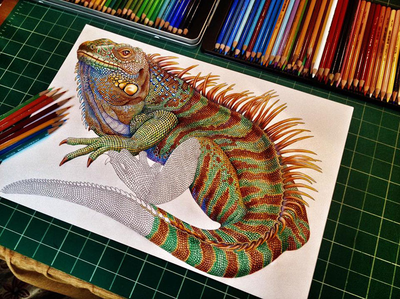 incredibly detailed pencil crayon drawings of iguana and chameleon by tim jeffs 5 These Artists Challenged Each Other to a Daily Animal Alphabet Drawing Duel
