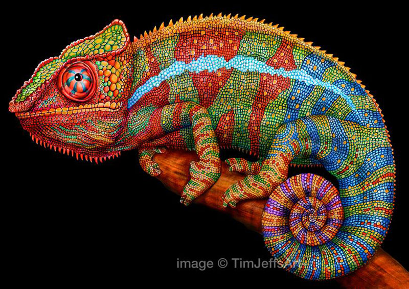 incredibly detailed pencil crayon drawings of iguana and chameleon by tim jeffs (6)
