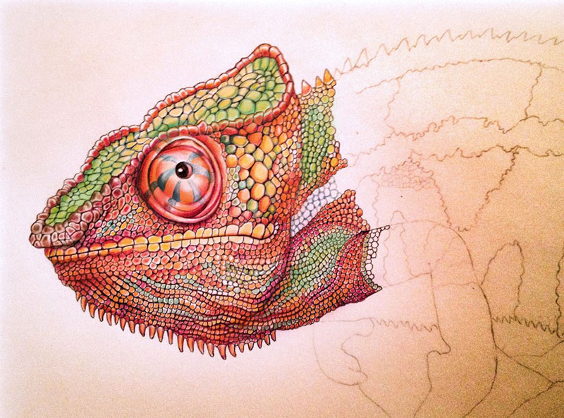 incredibly detailed pencil crayon drawings of iguana and chameleon by tim jeffs (7)