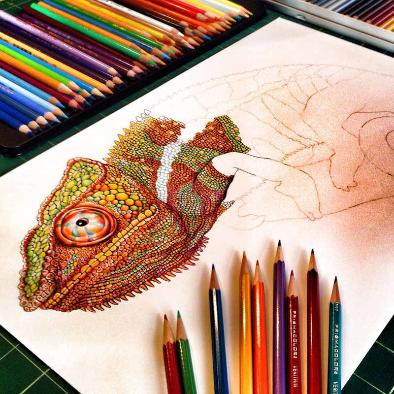 incredibly detailed pencil crayon drawings of iguana and chameleon by tim jeffs (8)