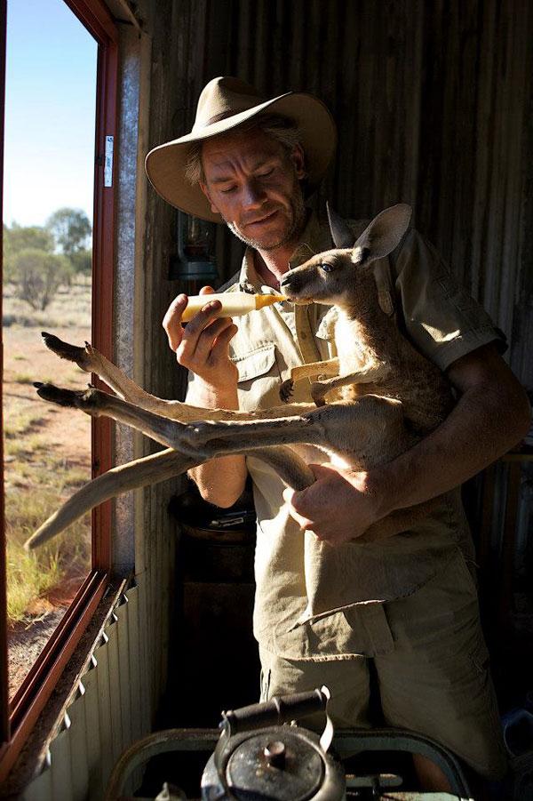 kangaroo dundee chris brolga barns kangaroo sanctuary (2)