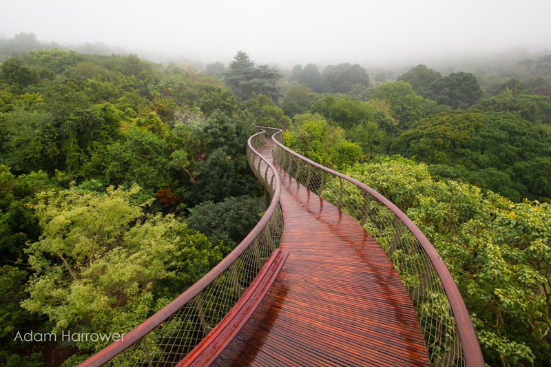 kirstenbosch tree canopy walkway cape town south africa 1 In Peru You Can Sleep Like a Condor, in a Floating Nest 1200 ft High