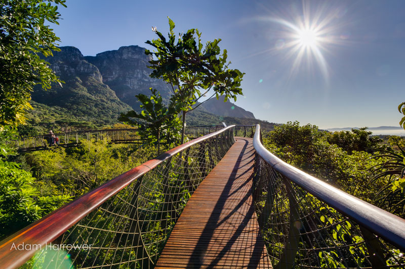 Kirstenbosch tree canopy walkway cape town south africa (10) & Kirstenbosch tree canopy walkway cape town south africa (10 ...