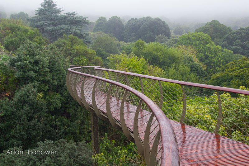 Kirstenbosch tree canopy walkway cape town south africa (2)