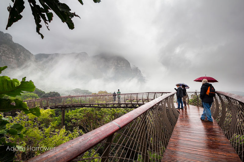 Kirstenbosch tree canopy walkway cape town south africa (3)