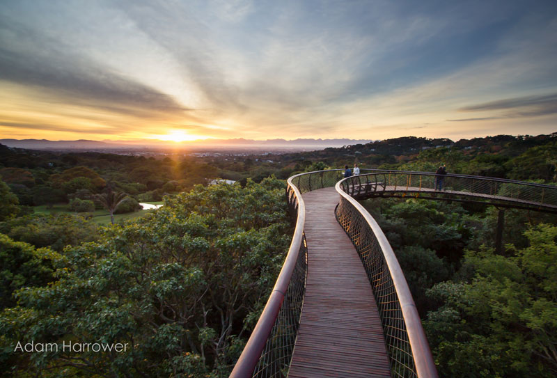 Kirstenbosch tree canopy walkway cape town south africa (4)