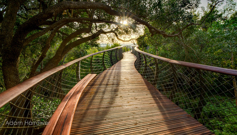 Kirstenbosch tree canopy walkway cape town south africa (6)