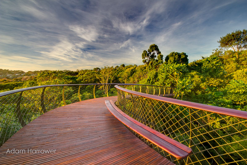 Kirstenbosch tree canopy walkway cape town south africa (9)