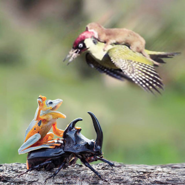 The Internet is Having a Field Day with the Bird Riding Weasel (3)