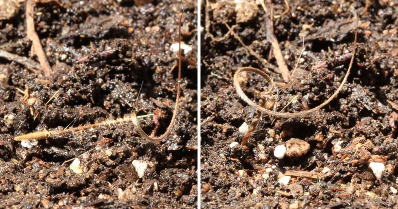 Incredible Timelapse Shows Plant Seed Drilling Itself Into the Ground