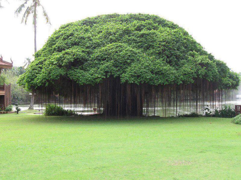 banyan tree hotel