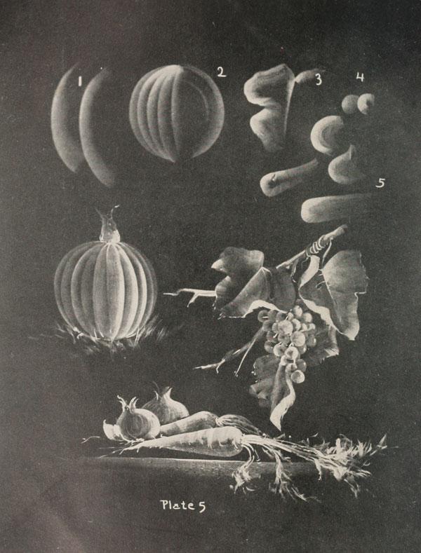blackboard chalk art from 1908 by frederick whitney (4)