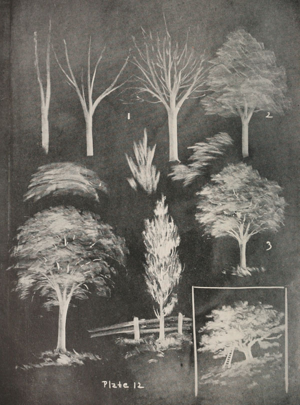 blackboard chalk art from 1908 by frederick whitney (7)